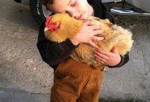 Boy holding chicken