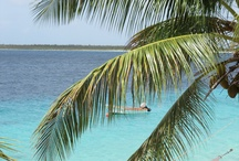 Scenery / Bonaire is one of the last unspoiled Caribbean islands. The entire island is a marine park protected to preserve the pristine eco system. http://www.bonairecaribbean.com/todo_bonaire.html