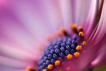 macro and nature photography