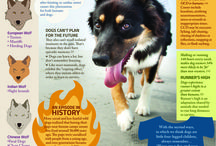 Infographics / Pet Infographics to keep pet owners in the KNOW!