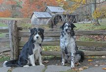Fabulous Footpaths / My pack and I LOVE hiking.  Living in the Carolinas, we have lots of gorgeous mountains, rivers, and trails to enjoy!