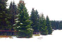 Winter wonderland ❄️ / Harz National Park