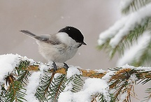 my little chickadees / by Carole L