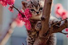 Mačiatka