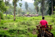 About cambodia / Cambodia: beautiful country