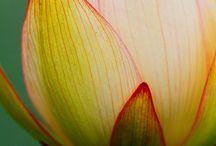 FLOWERS / by Kathryn Peebles