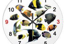 Saltwater Aquarium Fish / 水槽で飼える海水の生物、その関連商品など