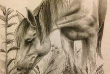 Heste tegninger