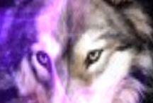 lilio