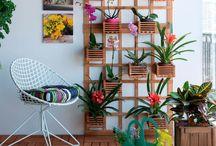 Plantas: Jardim Vertical