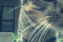 CAT* / Lucio<3 Cooming Soon