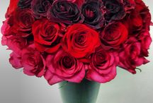 Best NYC Valentine's Day Flowers / https://www.gabrielawakeham.com/ Best Valentine flower delivery in NYC from locally owned independent boutique florist Gabriela Wakeham. We deliver high end Valentine flowers to Manhattan as far north as 135th Street, and also to Williamsburg, Long Island City, Brooklyn Heights, DUMBO, and nearby.  We have the best high end romantic Valentine flowers for NYC and deliver same day and next day. Order early before we are fully committed for February 14th 2018!