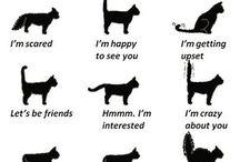 Kucing lucu