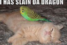 kittens :)
