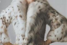 Lynx cat fur