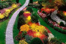 Amazing Gardens  / Amazing Gardens