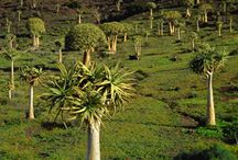 Hantam/ Boesmanland/ Karoo / Hantam, Boesmanland, Northern Cape, South Africa