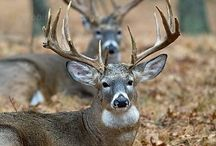 A buck or two! / by Chris Johnston