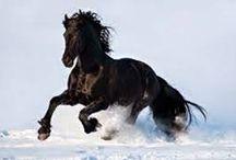 Horses!!❤❤❤