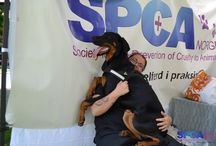 """SPCA Norway: """"Childrens day"""" 2014 / In Norway we celebrate a day called """"childrens day"""" in Telemark county, among others. We love to have a stand here and celebrate the children and educating people about animal welfare"""