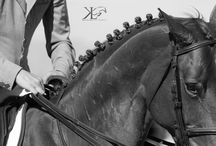 Photography: Horses//Show
