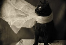 Black cat fever! / So mysterious sleek and black,are you pretty kitty cat! The full moon's out it's time to roam,but not to far from your witches home!!!  ~Twana~ / by Twana Gilles