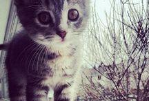 F U R R Y  F R I E N D S / My love for animals.
