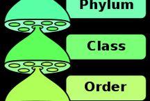 Systém botaniky