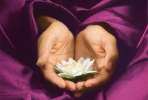蓮華...lotus