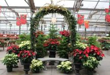 Holiday @ Garden Centers / Holiday retail ideas from independent garden centers.