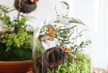 Terrariums / by Maryanne