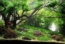 Aquascape Gallery / Best aquascapes that inspires you