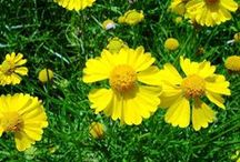 Colors -- Mellow Yellow