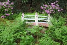Gardening and Yard / by Debra Thompson