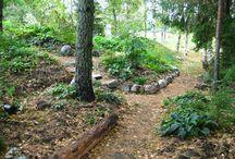 Skogsträdgård