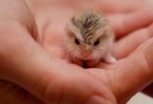 Cute animals babys
