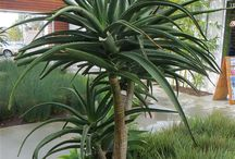 vet plante