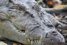 Reptiles Reptiles