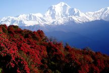 Tour in Nepal / Dreaming about a trip to Nepal? With plenty of exotic destination, Nepal offers some of most adventurous and appealing tour packages. Home to soaring peak, Mt. Everest, Nepal captivates many tourists with its soul-stirring landscapes, diverse geography, ancient heritage sites, adrenaline sports and abundant flora and fauna. Nepal has something to offer for every sort of adventure seeker.