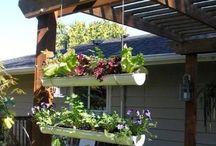 a garden/backyard / by Diana Vandiver