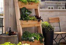 Ideas for urban garden