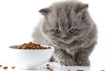 Cibo per gatti home made / Cibo buono