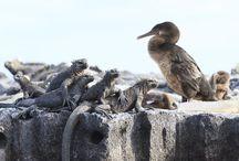 Fotoreise Galapagos / http://www.stefanopaterna.com/fotoreise-galapagos-inseln-und-machu-picchu/