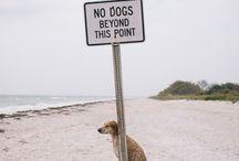 animals & puppies♥