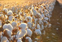 What is Organic Cotton and Why Is it Better?