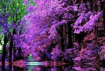 Beautiful Nature / Nature in all its beauty