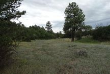 8496 CR 141, Durango, CO 81301 / Listing Broker - Shelley Low A wonderful hidden jewel just waiting for the right buyer. From the county road this appears to be fabulous fenced pasture land with a well. Once you drive the property, you will see this use to be an orchard that is tucked behind the pasture.