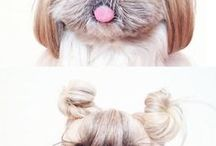 Grooming Ideas / Cool trends and tips for dog grooming!