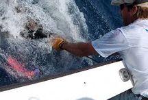 Barramundi Fishing for Beginners