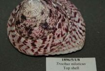 Shell or High Water / For the collections at RAMM, we present the very varied homes of land and sea snails.